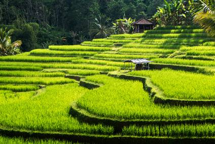 Terrazas de arroz y minorías étnicas de China, 15 días