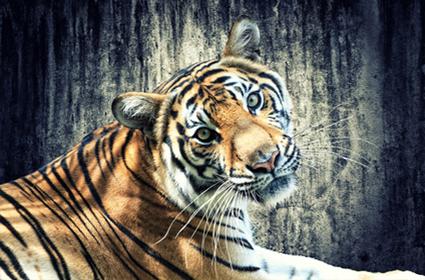 Viaje al norte de la India y Tigres del Bandhavgarh