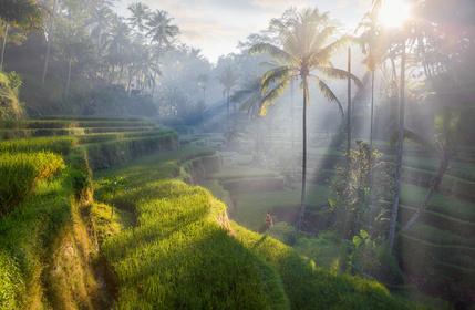 Increíble Bali