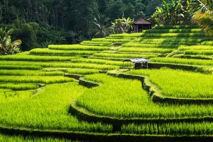 Luna de miel en Bali y las islas Gili