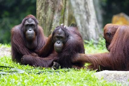 Sumatra, Java y Bali