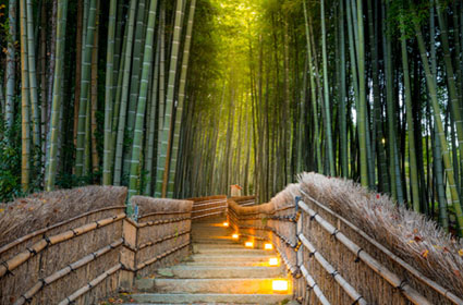 Viaje Japón al completo en rail pass