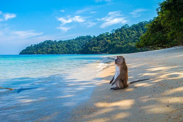 Tailandia al completo y las playas de Koh Tao